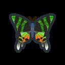 ニシキオオツバメガ.png