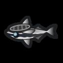 コバンザメ.png