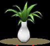 滴水兰盆栽.png