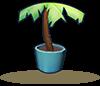 椰子树盆栽.png