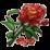 物品·牡丹花.png