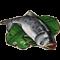 物品·鳙鱼.png