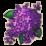 物品·紫丁香.png