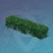 正逢花期的灌木丛.png