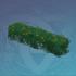 正逢花期的灌木丛