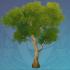 缃叶却砂树