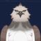 棕翎鹰图标.png