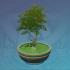 绿植盆栽-「松青尺树上」