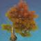 金叶盘伏树.png