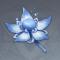奇妙而美丽的花.png
