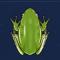 青蛙图标.png