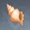 奇异的海螺.png
