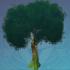 茁壮的萃华树