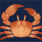 太阳蟹图标.png