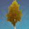 高大的桦树.png