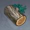 杉木.png