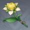 甜甜花.png