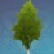 初成的桦树.png