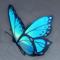 蝴蝶翅膀.png