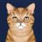 虎纹猫图标.png