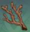 远海夷地的瑚枝.png