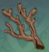 远海夷地的瑚枝