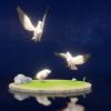 白鸽详图.png