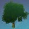 年幼的萃华树.png